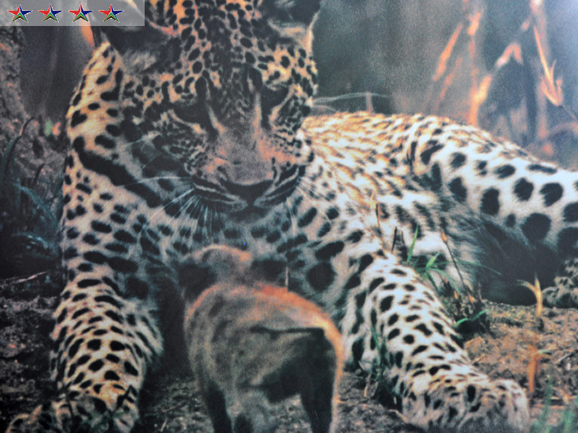 Leopard Suite Gallery