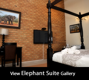 Elephant Suite gallery at Montana Guesthouse